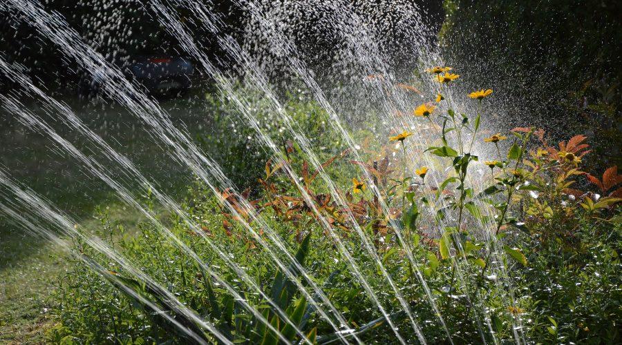 garden-3664278_1920